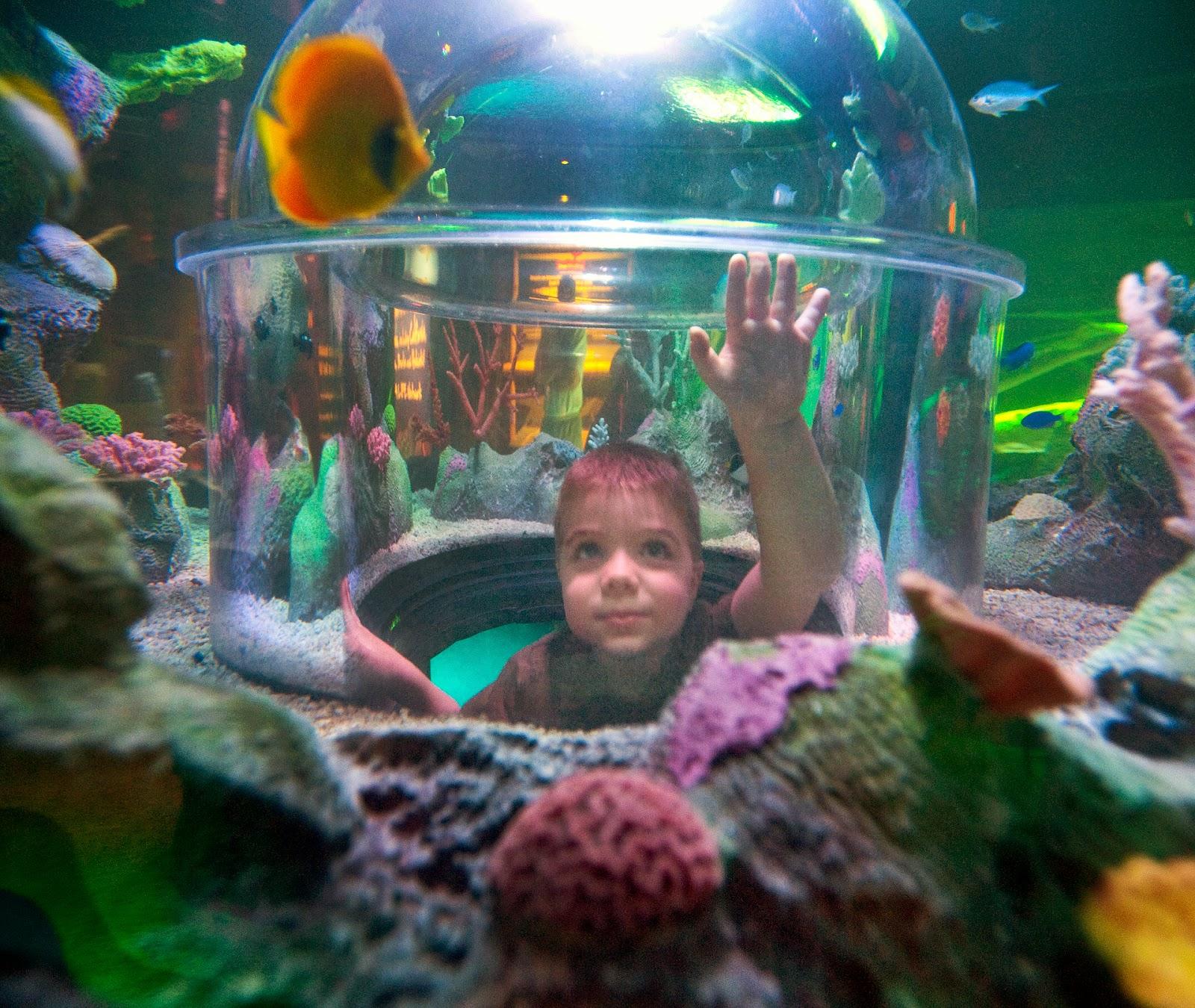 Sea Life Michigan, aquarium, sealilfe, grand opening, Michigan