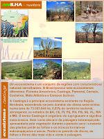 ecoILHA: Caatinga