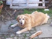 Il mio cane 2