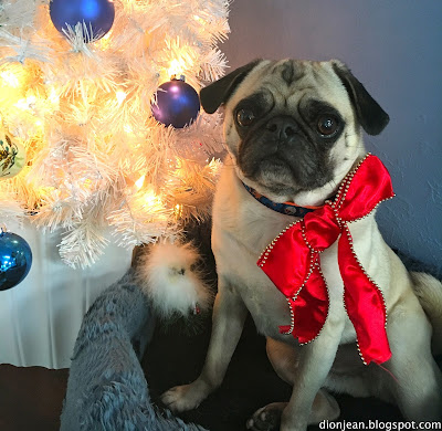 Pugs can make good presents for the right family