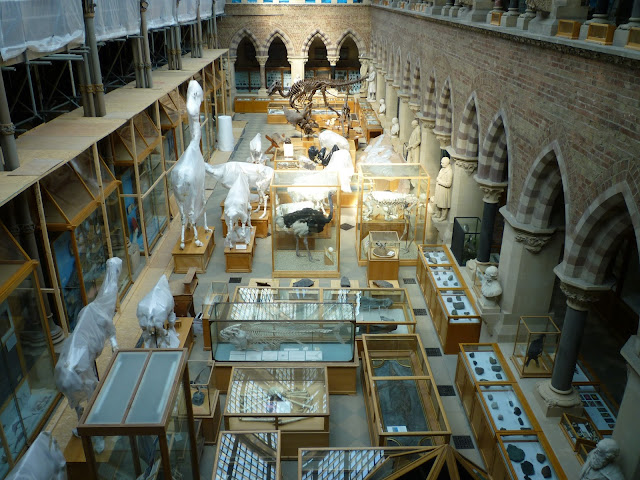 oxford university museum of natural history via lovebirds vintage