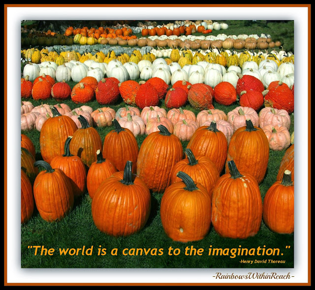 Imagination Quotation from Debbie Clement Collection!