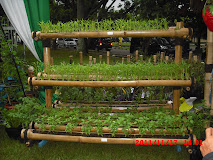 Budidaya sayuran perkotaan