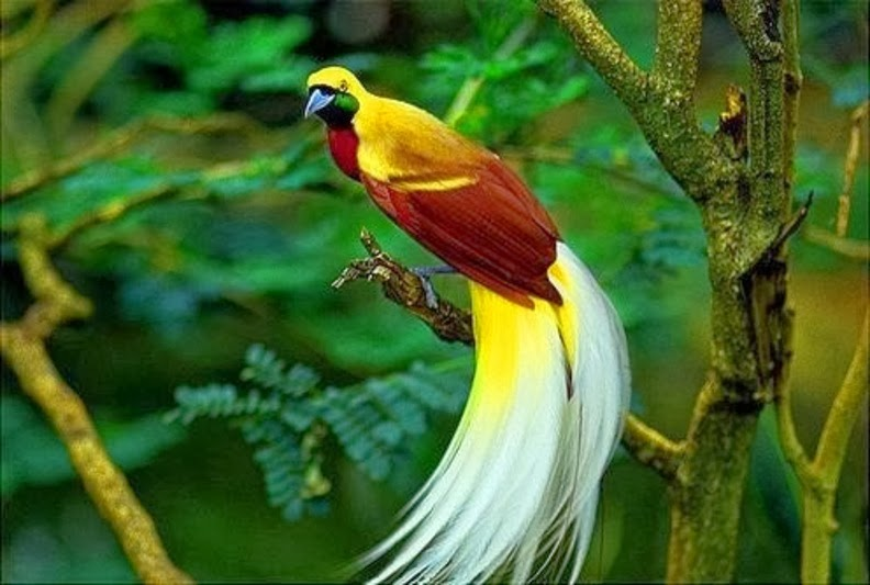 Birds Of Paradise Wallpaper Beauty Walpaper