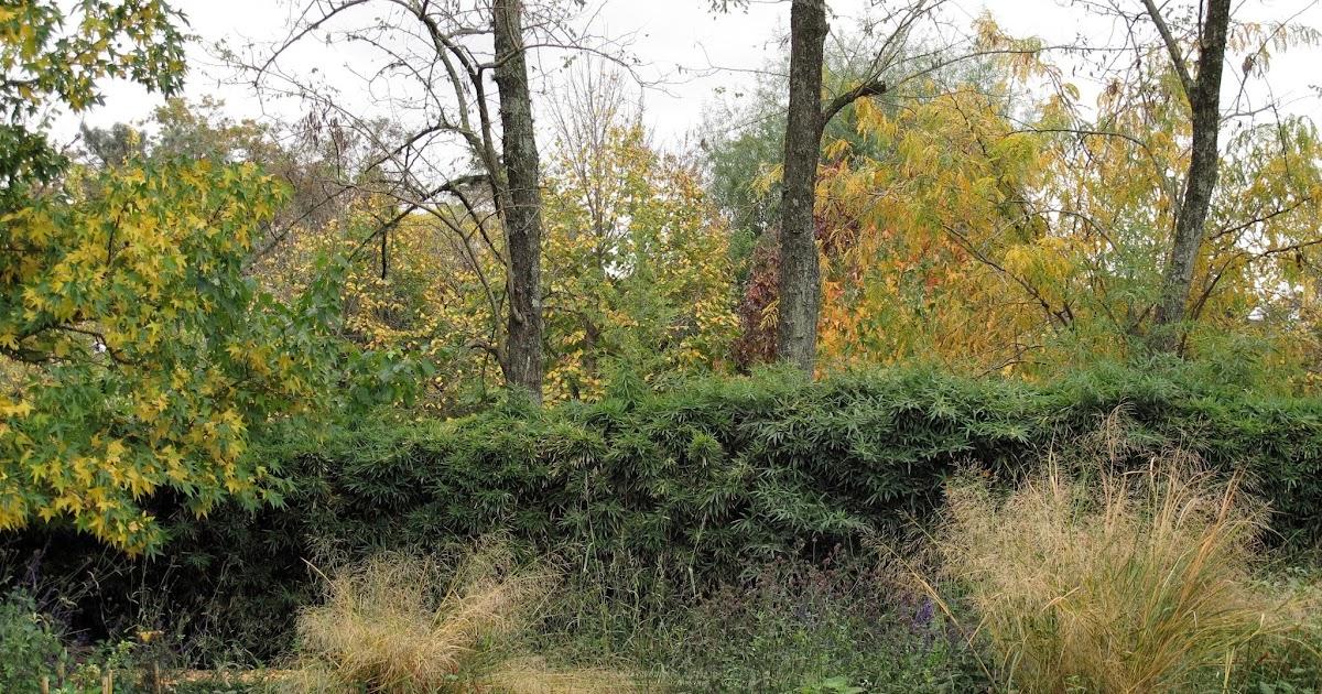 En el jardin cercos tapar hasta d nde for Coniferas de jardin