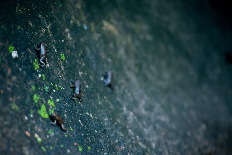 Bébés grenouilles ou crapauds