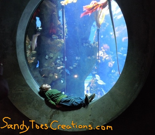 Sandy Toes Creations- Great Field Trips Near Santa Cruz County