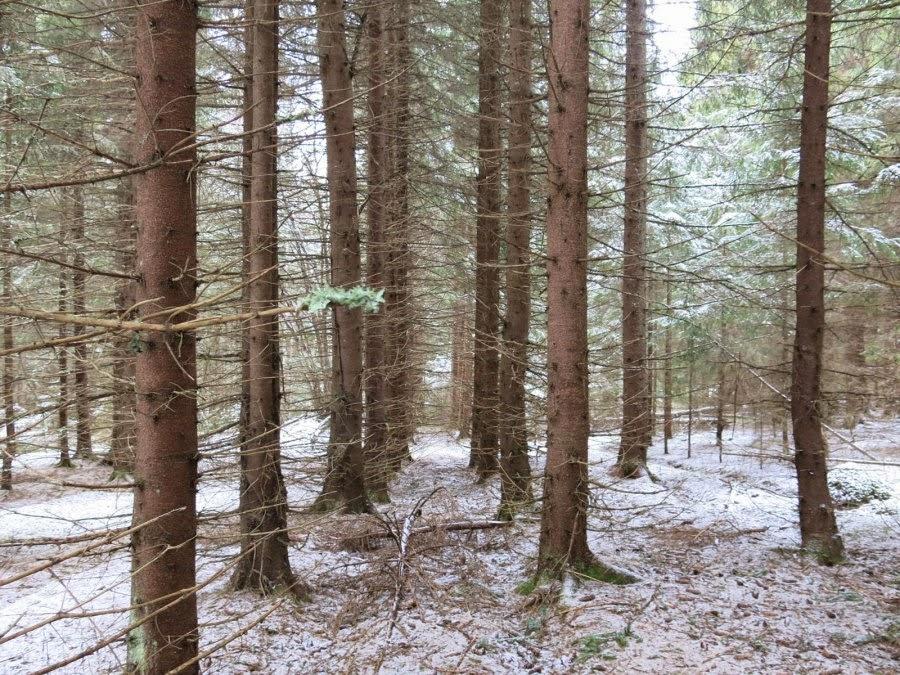 https://ekomuseumbergslagen.wordpress.com/2014/03/27/spar-av-livet-i-lovmarken/planterad-skog/