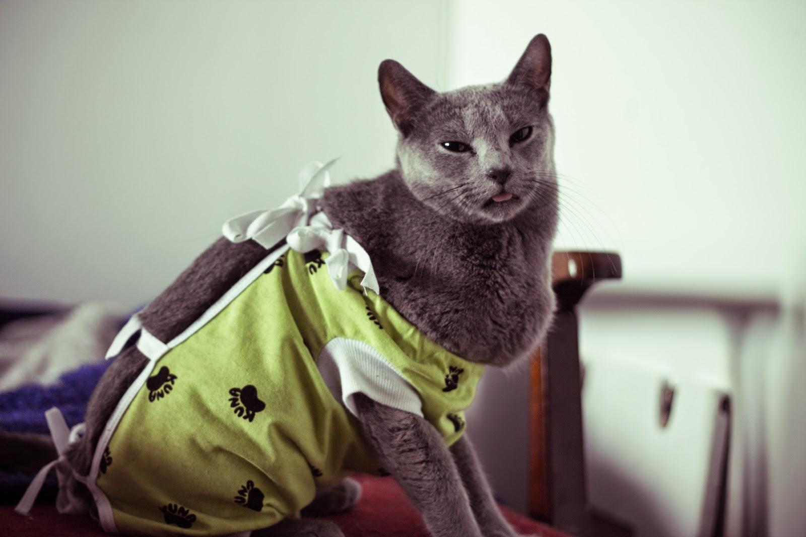 kotka w kubraczku