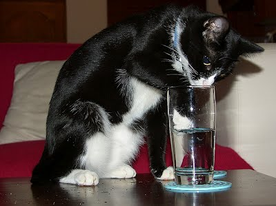 15 cats drinking from water glasses, funny cats, cat pictures, cute cat pictures