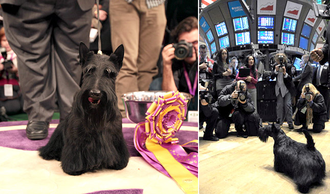 Age Of Dog When They Win Best In Show