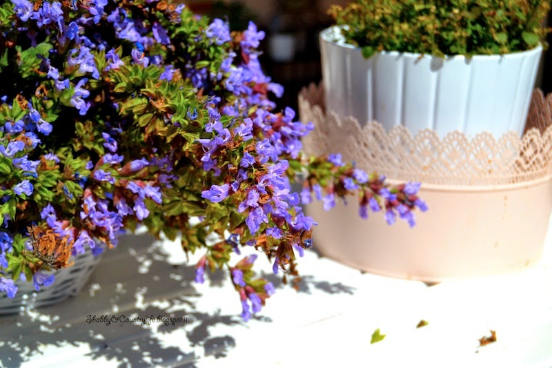 La bella e buona Salvia Officinalis  [ Infusi & Decotti] - shabby&countrylife.blogspot.it