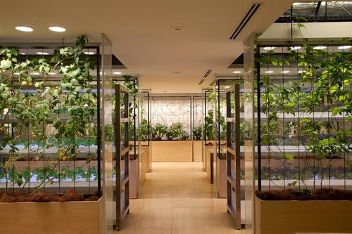 20-Urban-Farm-Building-Architects-Kono-Designs-Pasona-Group-www-designstack-co