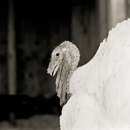 Isa Leshko fotografia preto e branco animais velhos idosos