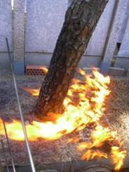 El efecto chimenea en los troncos