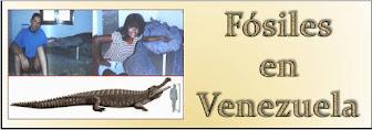 Fósiles en Urumaco, estado Falcón.