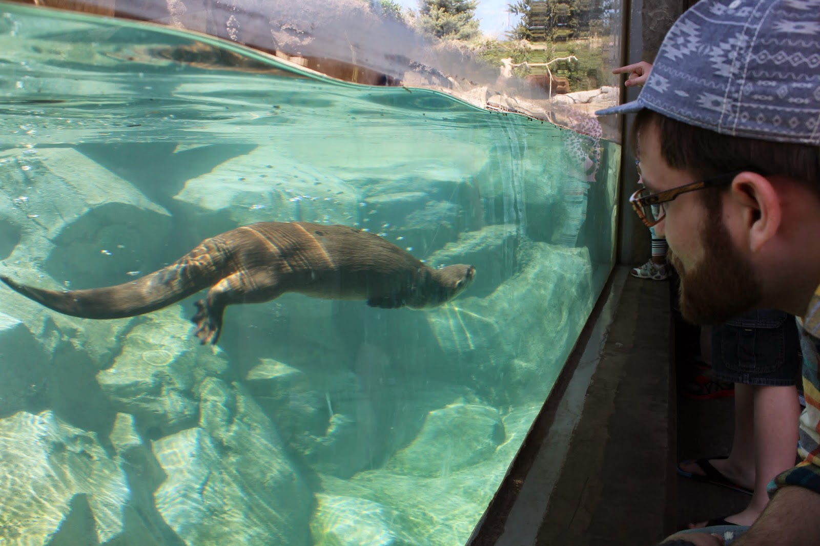 otters at the Hogle Zoo