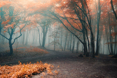 Te sigo esperando aquí en la penumbra del bosque - Magic forest