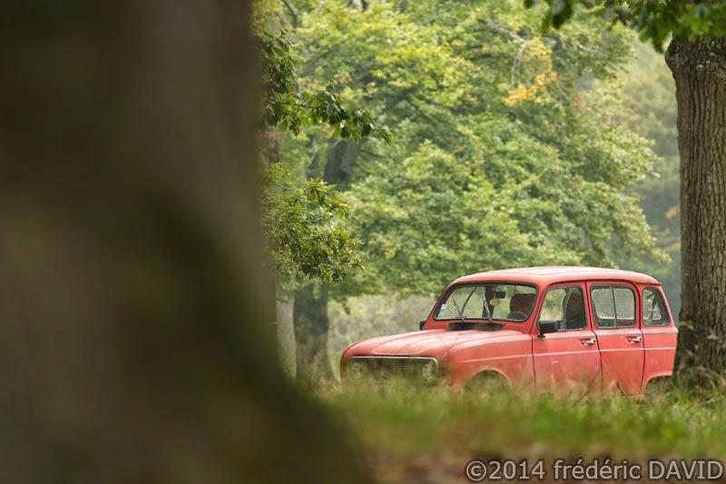 voiture vintage renault 4L collection forêt Fontainebleau Seie-et-Marne