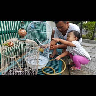 Membersihkan Kotoran Kandang - Jenis Burung Kolibri Ninja