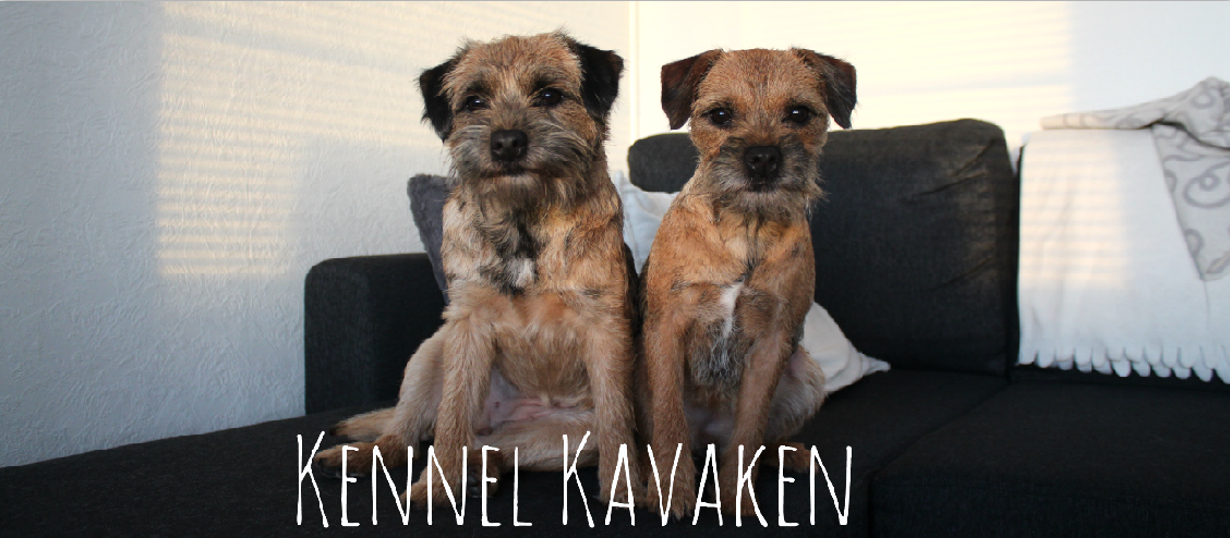 Kennel Kavaken