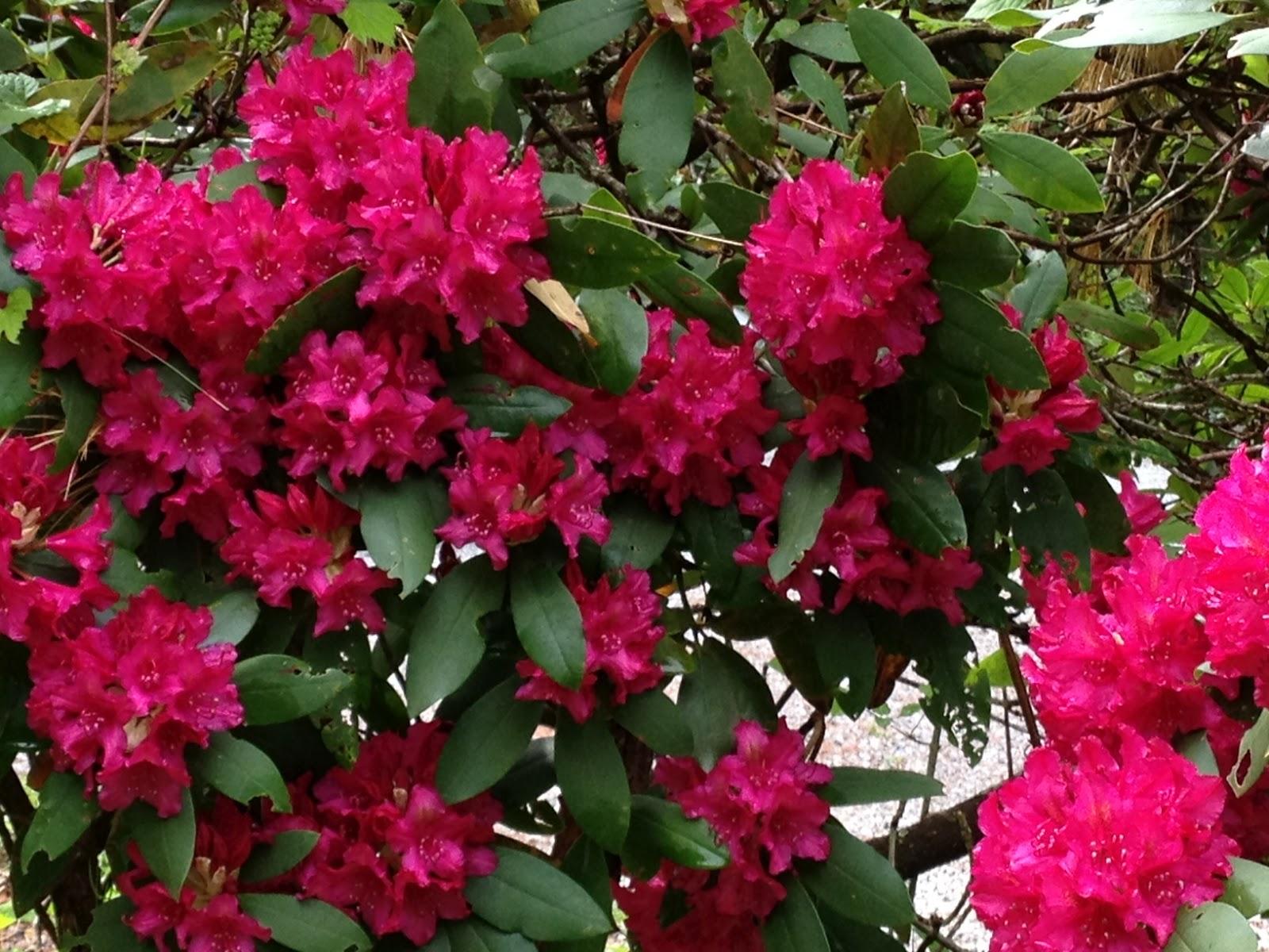 Deborah Velásquez May Flower Challenge • Fabulous Fuchsia