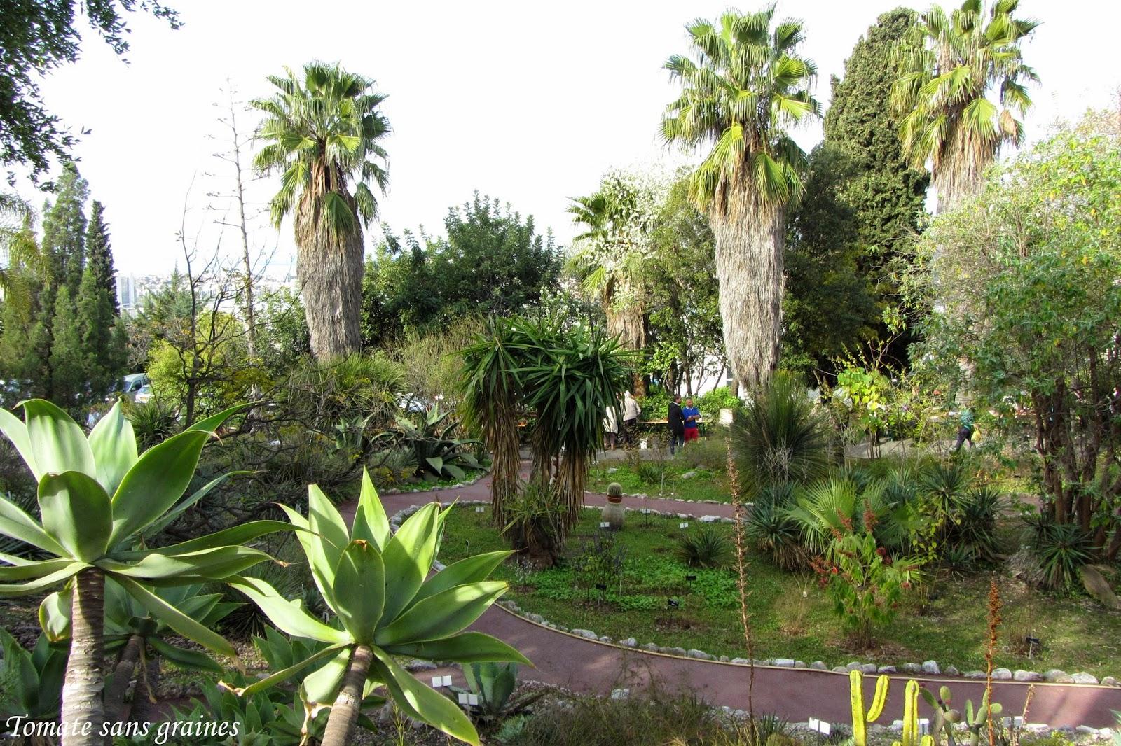 La bourse aux plantes de printemps au jardin botanique de for Jardin botanique nice