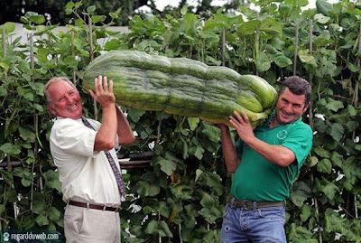 Images rigolotes et surprenantes Alimentation - Record v7