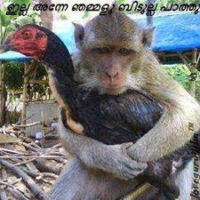facebook malayalam photo comments Anne njammalu bidoola paathu Monkey and chicken