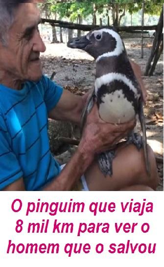 PINGUIM GRATO