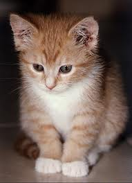 Anak kucing lagi merenungi