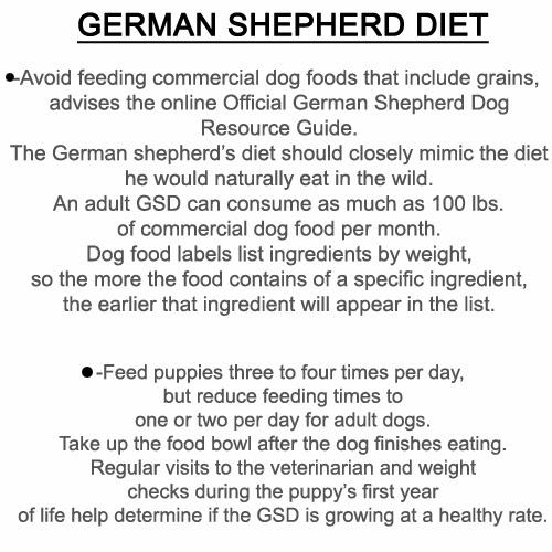 German Shepherd Food Diet