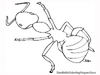 ant small insect coloring pages