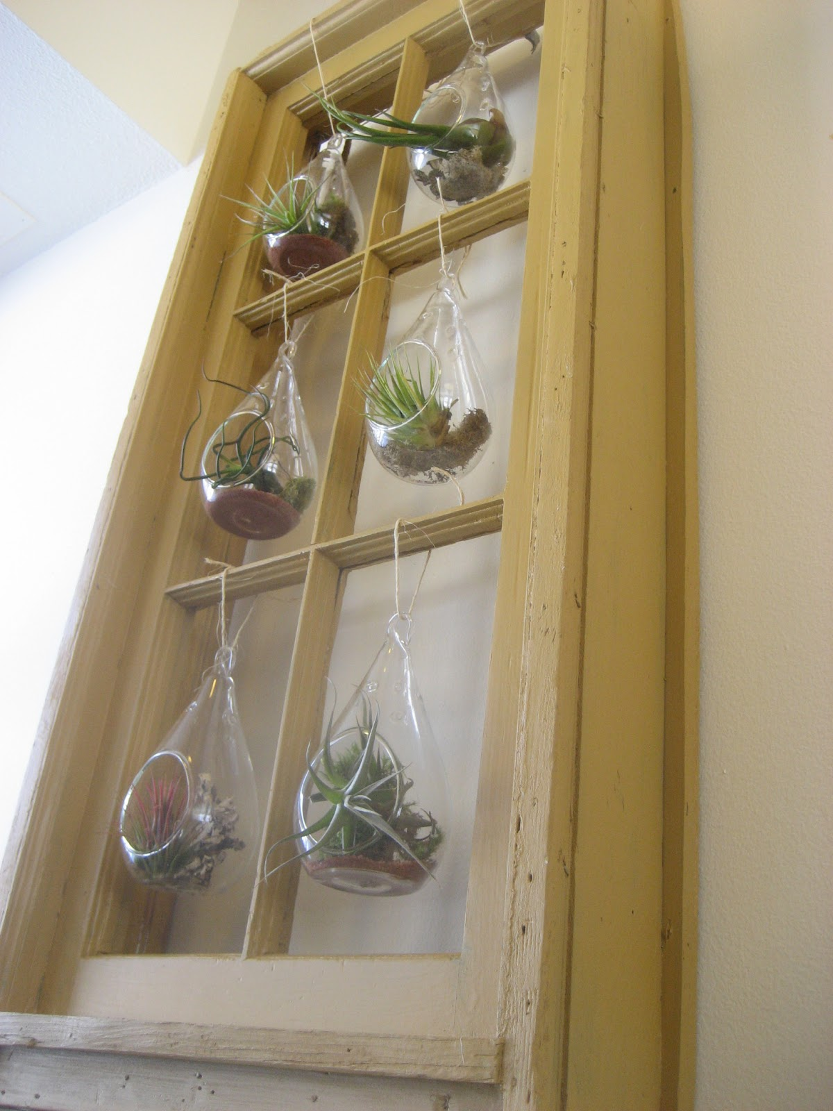 Chuck does art diy hanging window frame tillandsia air for Air plant wall art