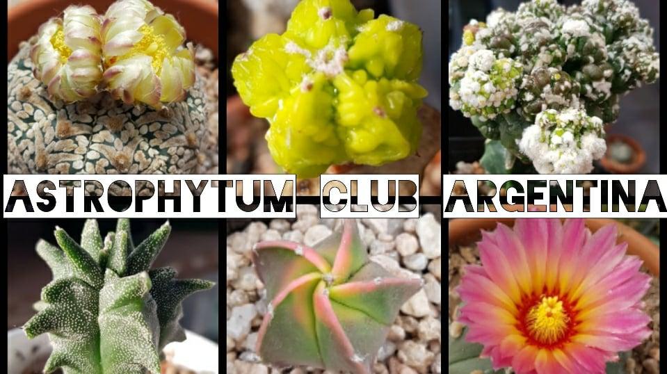Astrophytum Club Argentina