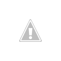 White flowers of mirabelles in Spring