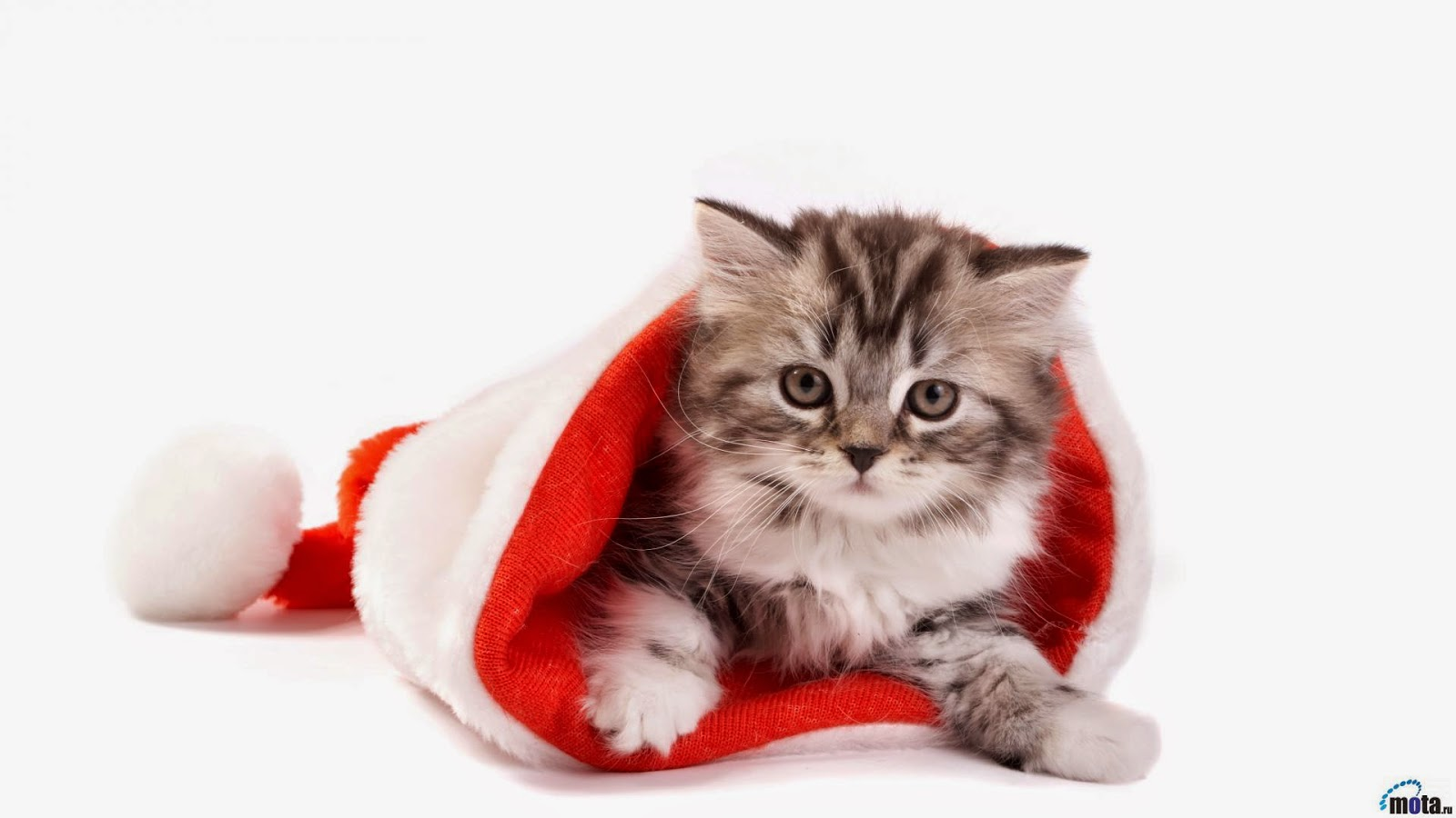 Sweet Cat Christmas