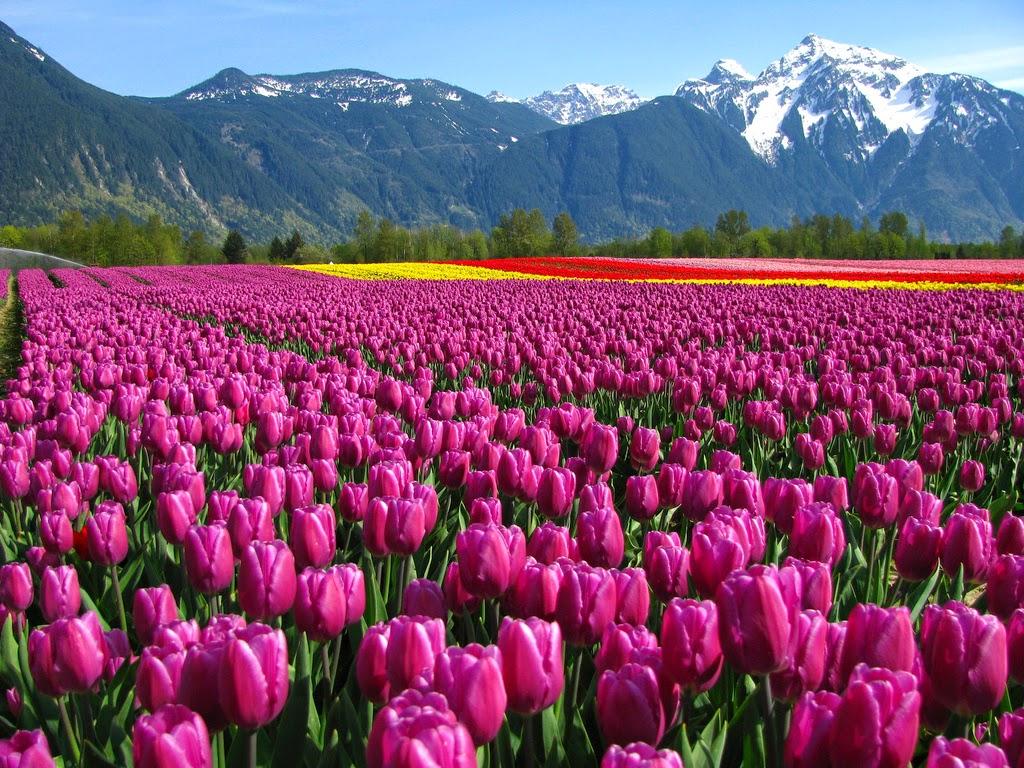 Taman Bunga Yang Indah Bagaikan Di Syurga Cantik Gilerrrrr