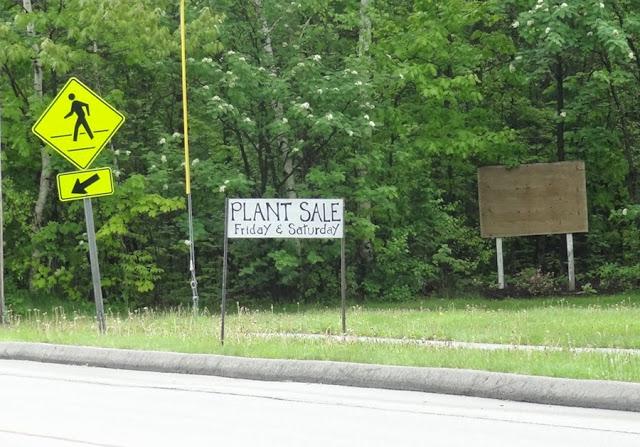 Friends Plant Sale,Union Street,Bangor Maine