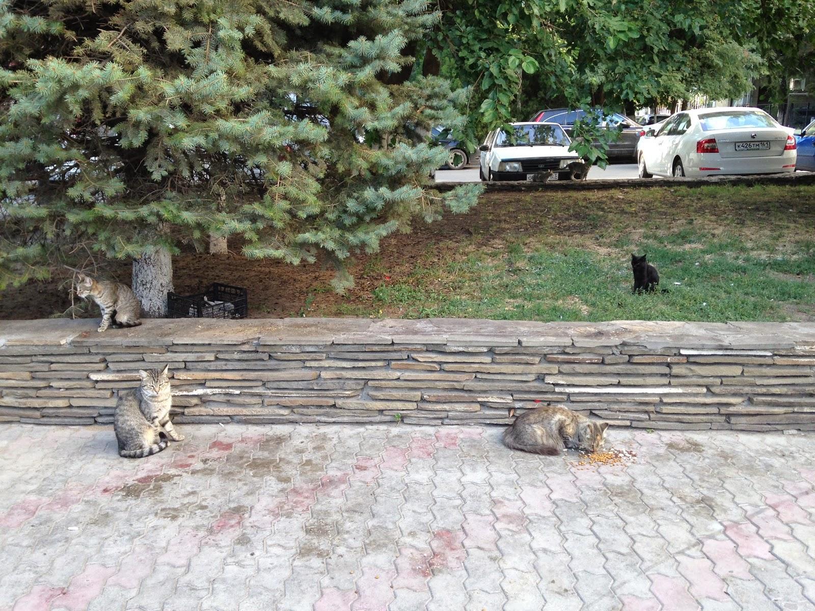 Коты-на-Университетском