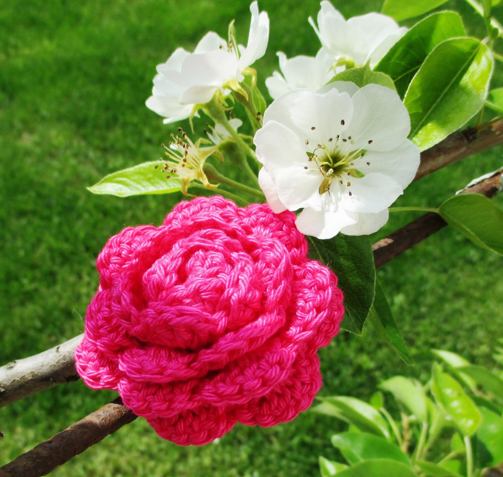 denisandra kunterbunt willst du rose kaufen. Black Bedroom Furniture Sets. Home Design Ideas