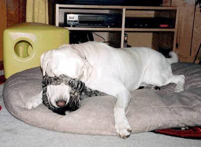 abraço de cão e gato, cão e gato amigos, animais amigos, cat and dog hug, cat & dog kissing, cão e gato brincando