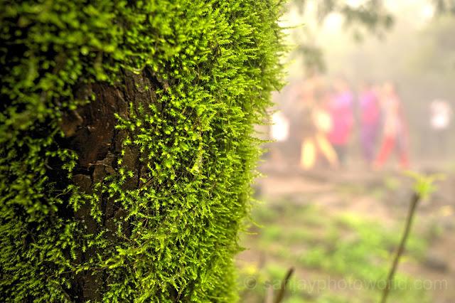 grass on tree