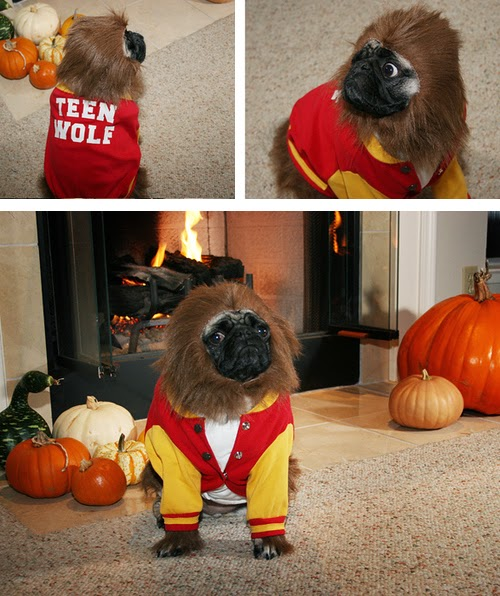 Funny halloween animals 11
