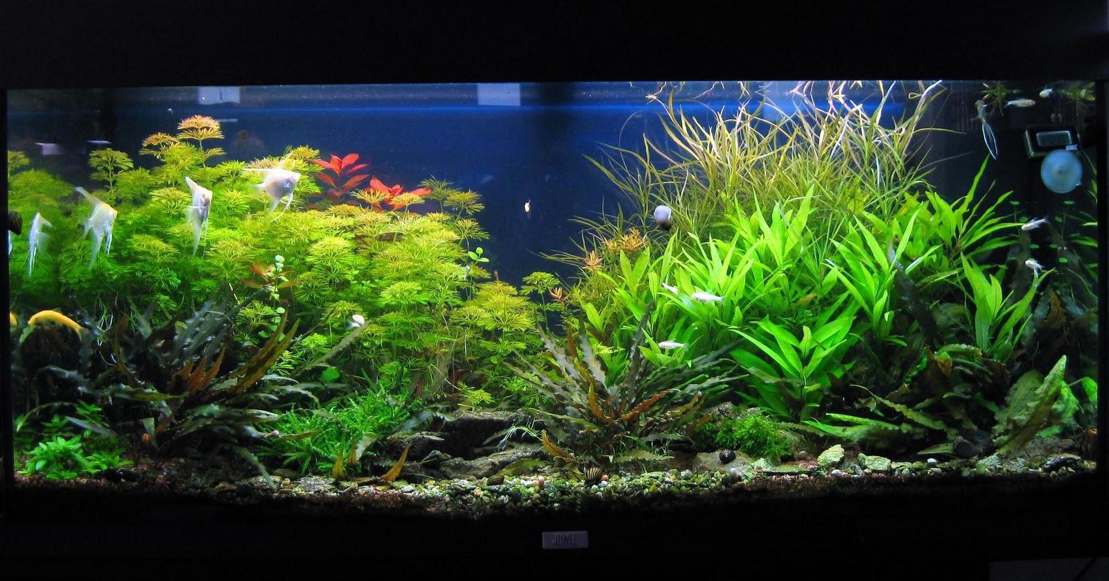 Produits anti algues engrais pour aquarium conditionneur for Aquarium pas cher 50l