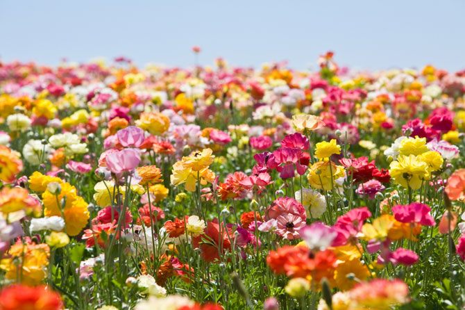 Beautiful Flower Garden | 670 x 446 · 98 kB · jpeg