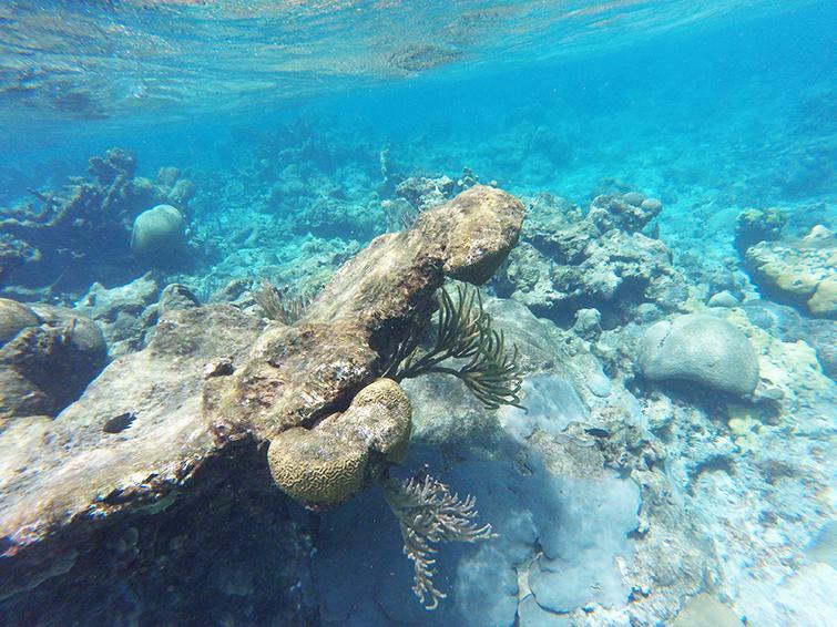 St. Croix Snorkeling
