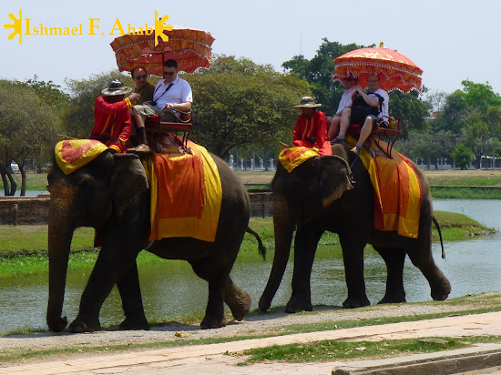Thai Elephants in Ayutthaya Historical Park