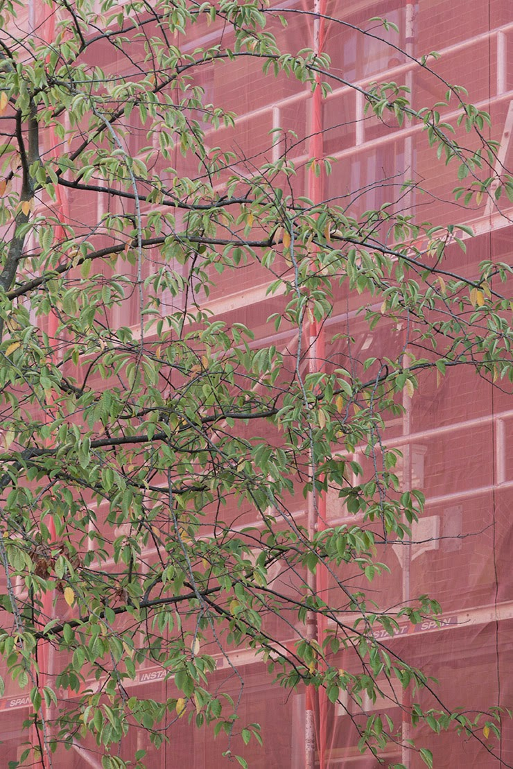 green tree and red scaffolding