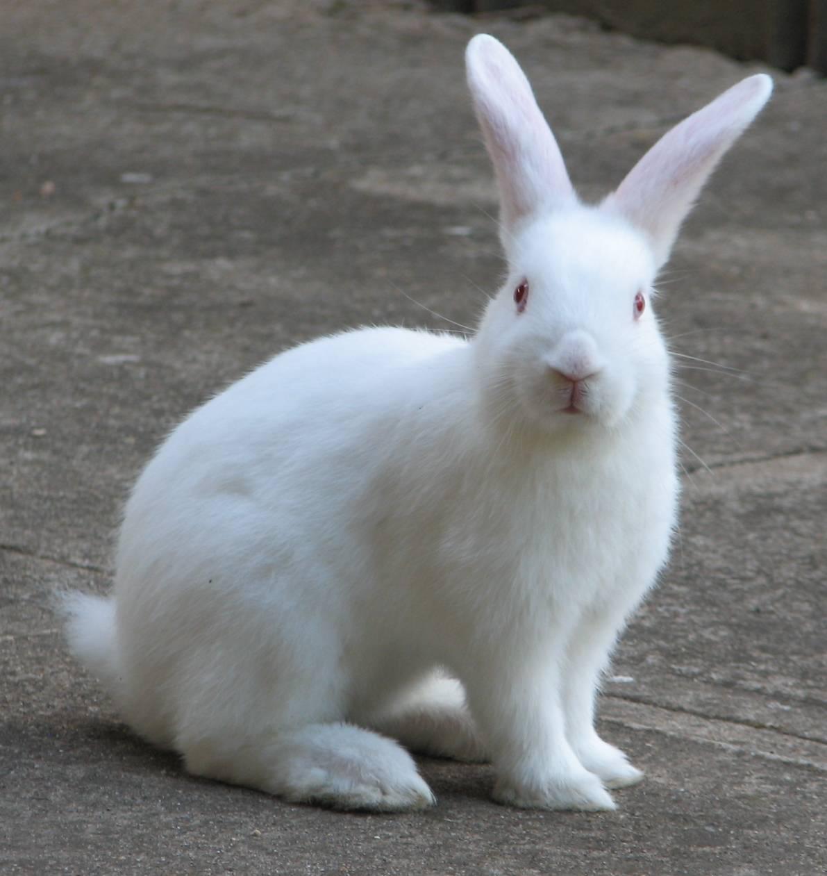 MarivanyBlog: Tips Memelihara dan Merawat Kelinci